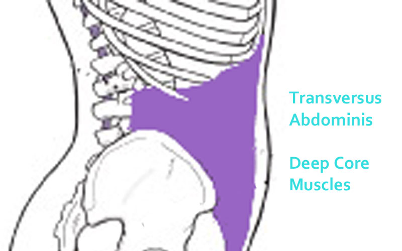 transversus abdominus strenthening for core control and stress urinary incontinence prevention